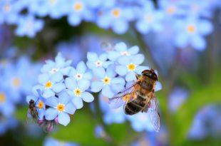 Für Insekten wie Bienen wird es immer schwieriger, passende Nistplätze zu finden. Mit neuen Insektenhotels möchte man in Bebra einen Beitrag zum Artenschutz leisten.